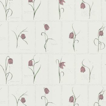 059552_24lin Papel Pintado Tulipán Rosa Flor Vegetal