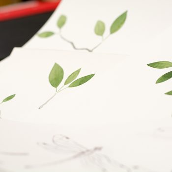 Papel Pintado Libélula Vegetal