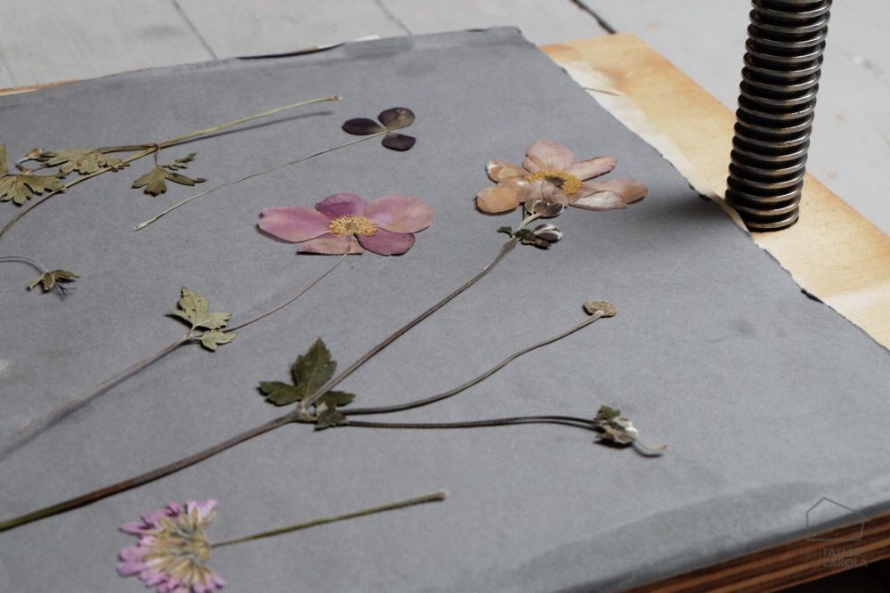 0693661_sim_cra_papel_pintado_botanica_herbarium