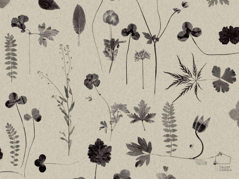 0693662__sim_bot Papel Pintado Vegetal Flor Gris
