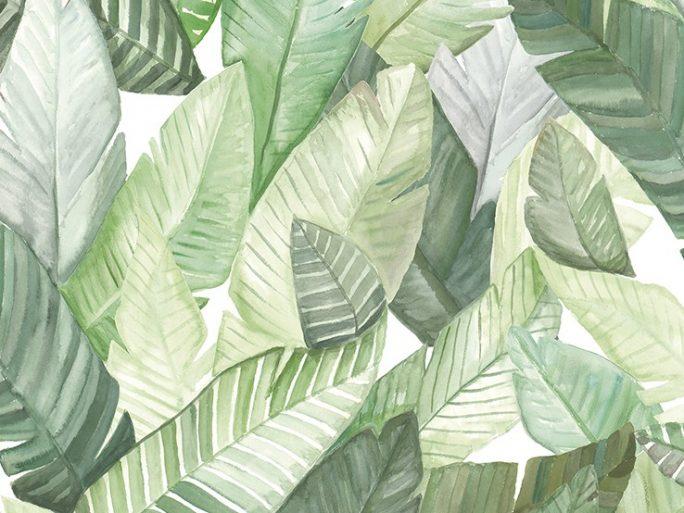 Papel Pintado Hojas Banano 069banw5900020