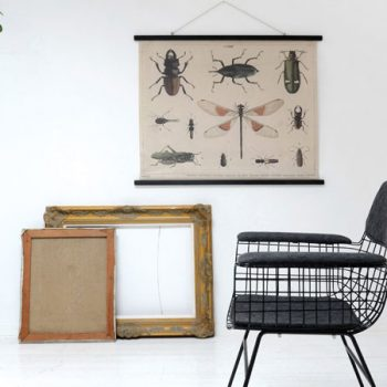 086asc0039 Lámina Insectos sobre tela