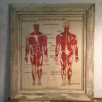 097c Lámina de anatomía antigua Systeme Musculaire