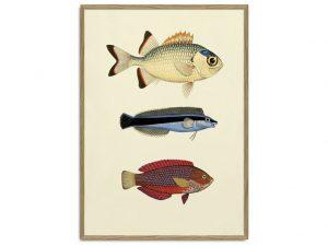 Fish Draw
