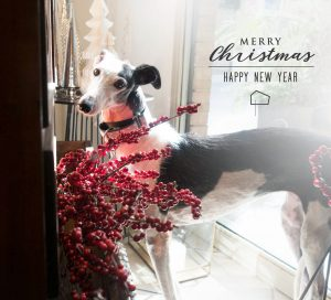 Mela Navidad